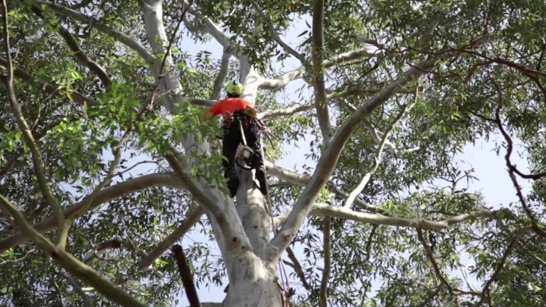 Tree Pruning | Tree Pruning Contractors | Tree Work Northamptonshire | Higham Landscapes
